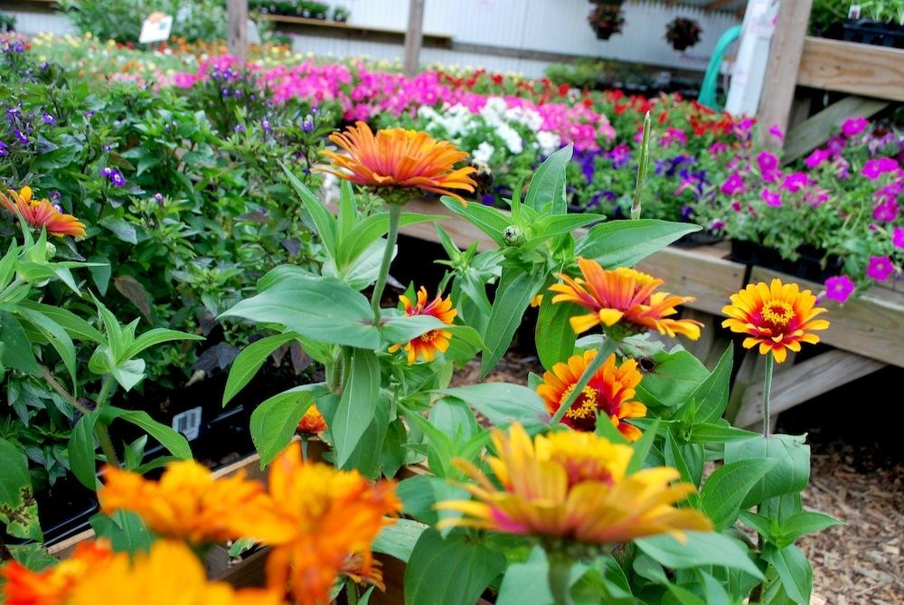 Garden Center in Summer