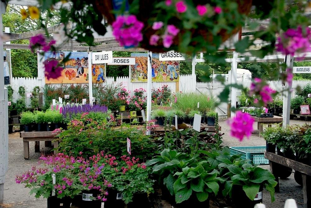 Perennials Garden Center