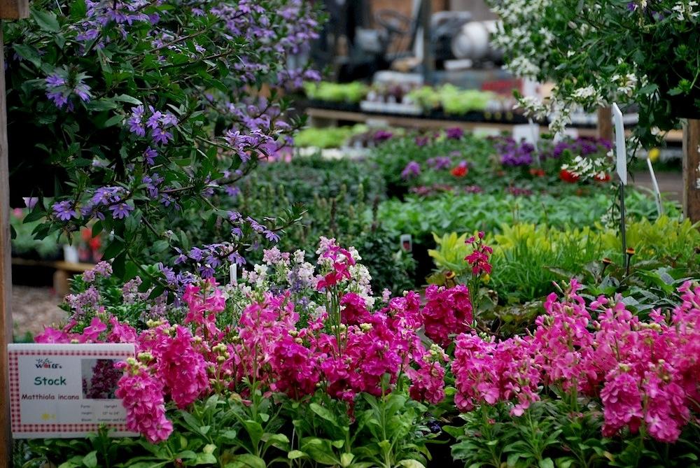 Pink & Purple Summer Flowers