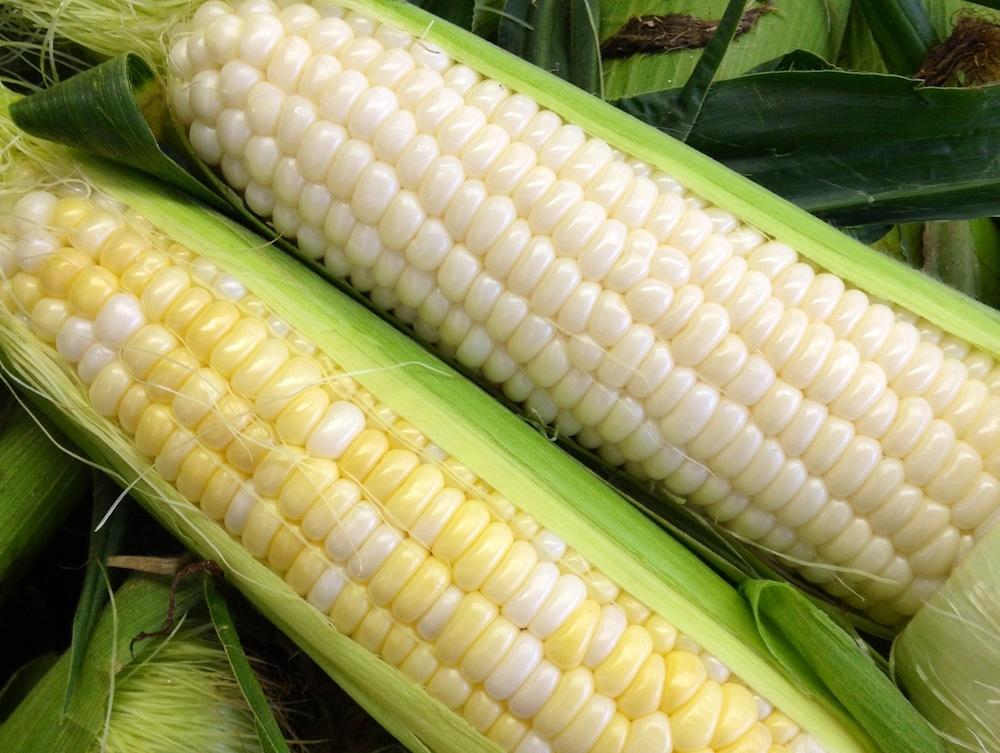 corn 1000 x 750