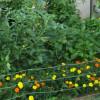 Dreams of a Garden