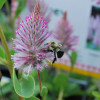 Protecting Pollinators in Your Vegetable Garden