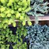 Summer Savvy Succulents & A Jam Recipe, Too.