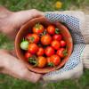 True or False? Test Your Garden Know-How!