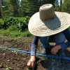 Weeds! How to Beat Them or Enjoy Them