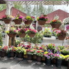 How to Choose Outdoor Plants for a Small Patio