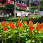 Bring Your Gardening Dreams to Life at Wolff's Plant & Garden Center
