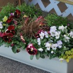 Designing Early Spring Flower Boxes