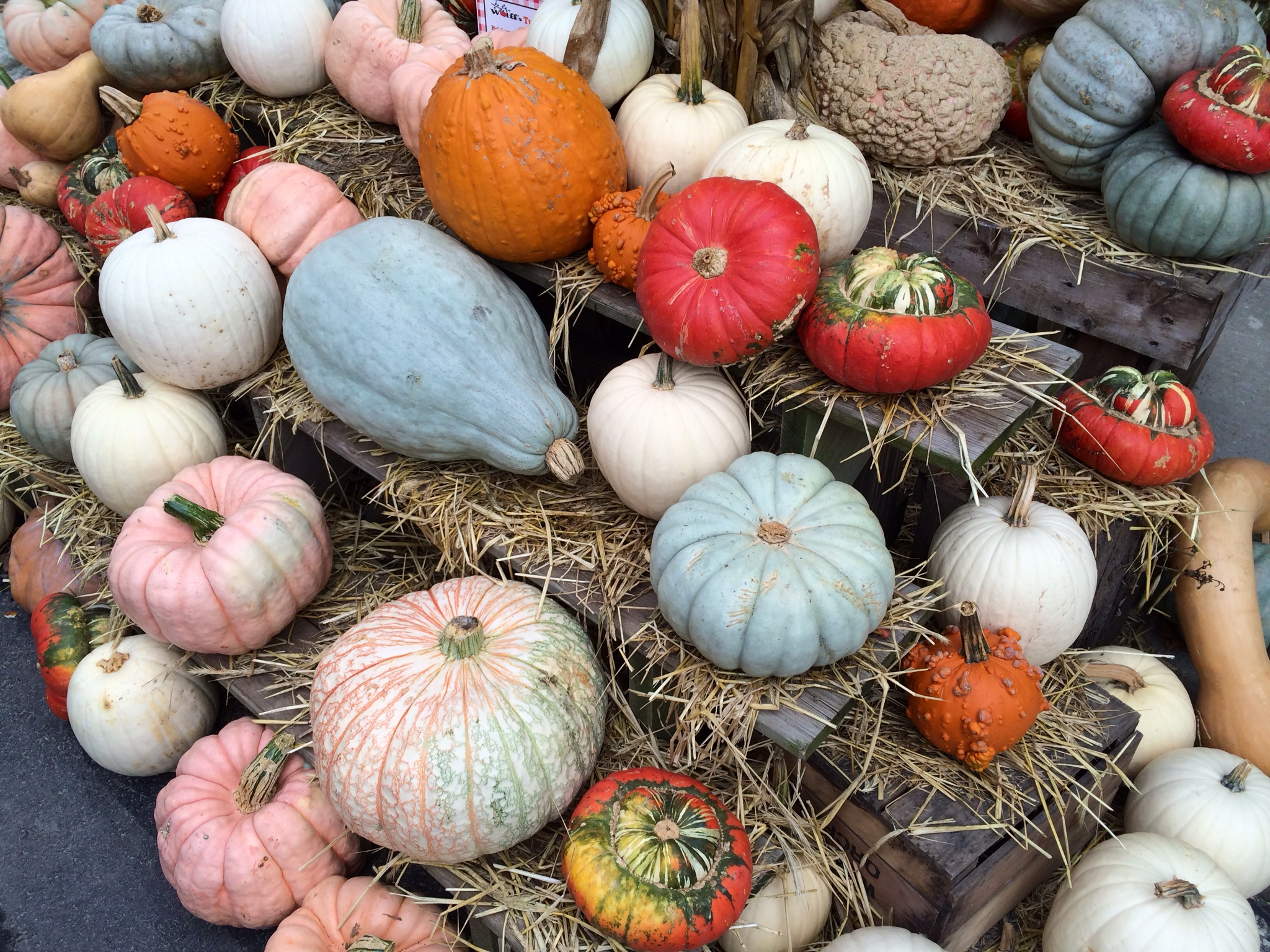Food Or Decoration Here S Our Heirloom Pumpkin Advice
