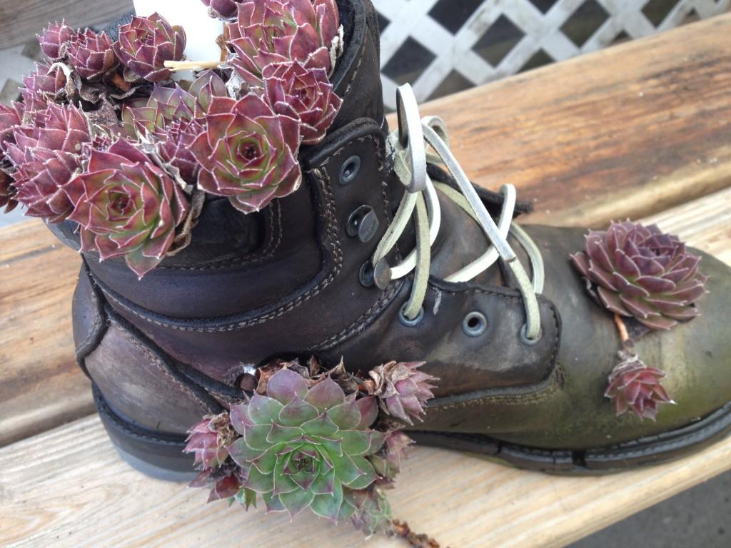 succulant shoe planter