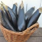 Eggplant in basket