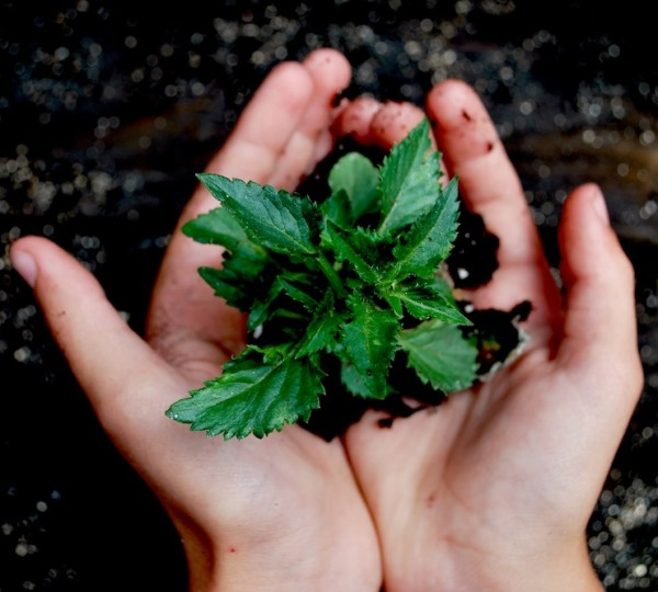 Plant in Soil with Hand