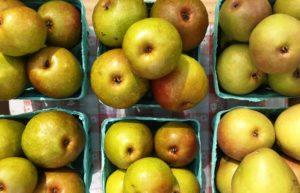 seckel-pears