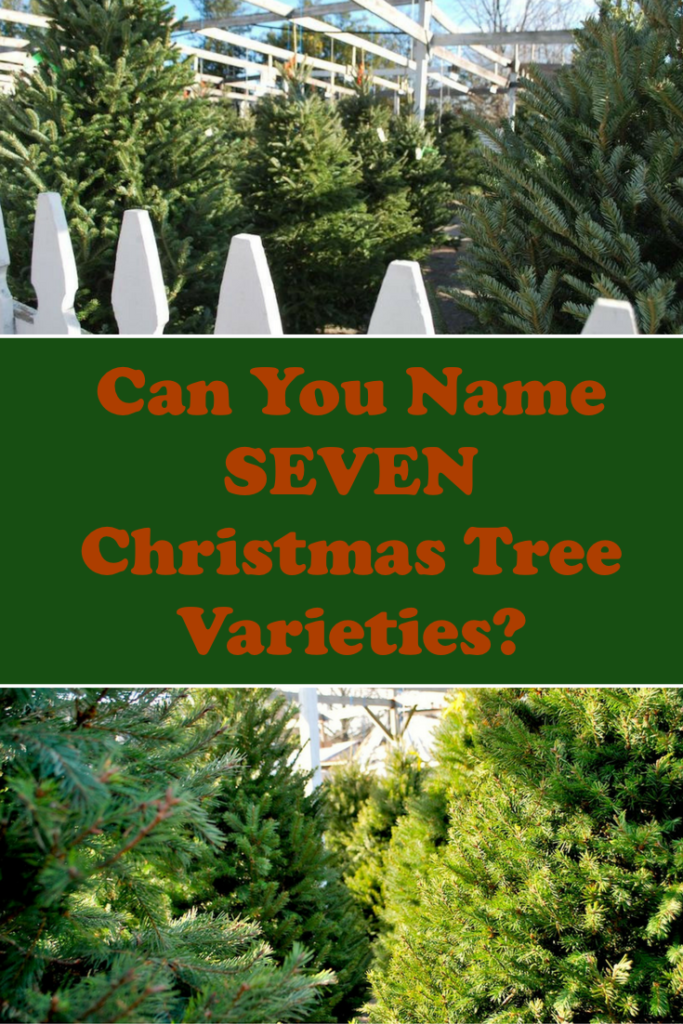 Test your Christmas Tree knowledge!